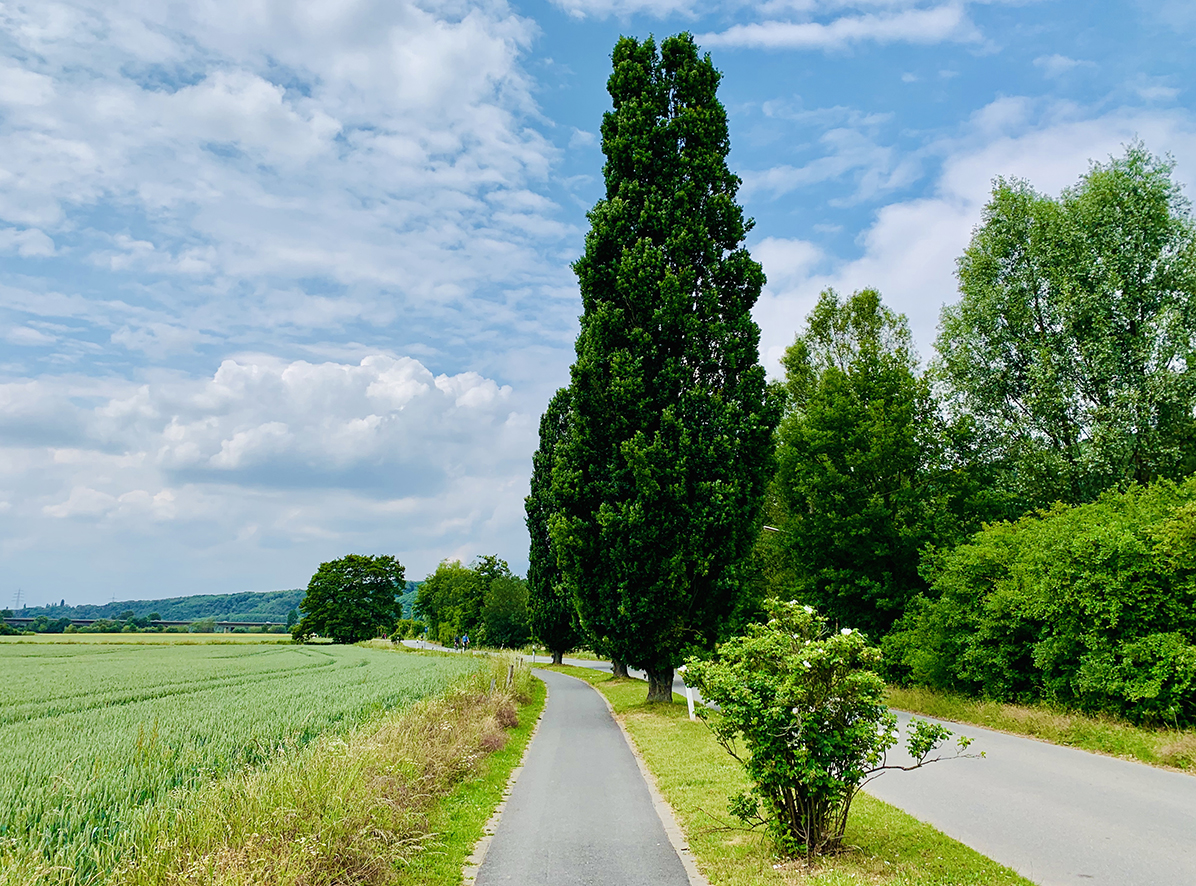Laufabenteuer Ruhrtalradweg – Hübsche Eichen Am Wegesrand Bei Bochum-Stiepel