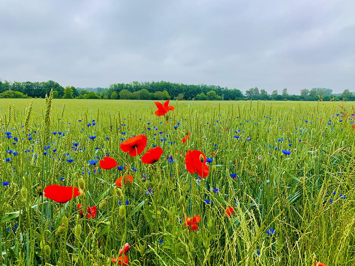 Laufabenteuer Ruhrtalradweg – Malerische Felder Kurz Vor Schwerte